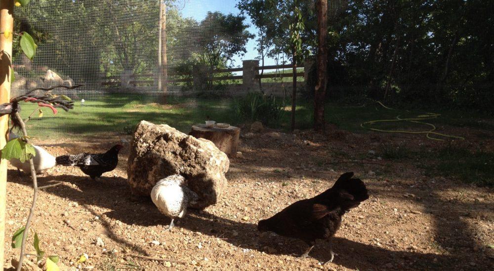 Espace détente et animaux camping Avelanede